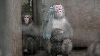 Primaatide lemmikloomadena pidamine keelatakse ära