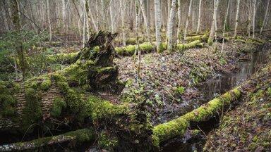 Millist energiat inimene selle aja jooksul, kui puud surevad ja kõdunevad, puidu asemel kasutab ja mis saab pärast 50 aastat?