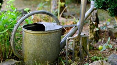 10 осенних работ в саду, которые будущей весной сделают ваш сад еще лучше