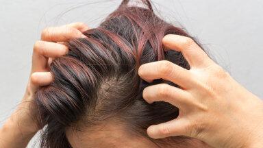 Iga juuksur hoiaks peast kinni ehk ära selliseid vigu juuksehoolduses küll tee