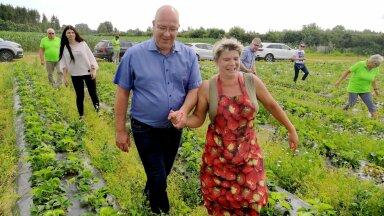 Eelmine põllumajandusminister Arvo Aller ulatas küll maasikapõllul Janika Lindsalule toetava käe, kuid tema erakond EKRE oli võõrtööjõu Eestisse lubamise vastu ja see tekitas maasikakasvatajatele tohutu kahju.