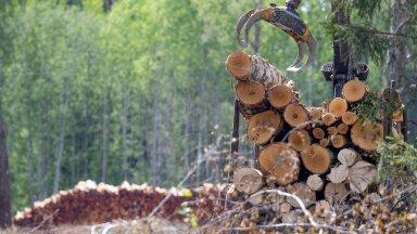 Kui metsi raiuda sellises tempos nagu metsamajanduse tavaline praktika ette näeb, tuleb Eestil peagi hakata CO2 kvooti juurde ostma.