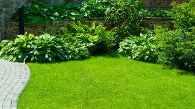 Nippe, mida tasuks muru niitmise ja hooldamise kohta teada
