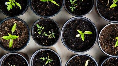 Rohenäpud, rõõmustage, sest aeg on küps, et seemned mulda pista