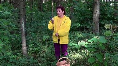 Kuidas metsa minnes sealt ka välja pääseda