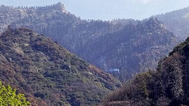 Sequoia rahvuspargis suitsev sekvoia (foto: AP / Scanpix)