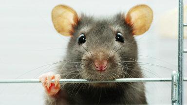 Aasta loom 2021 on rott
