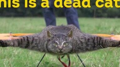 VIDEO | KURIOOSUM: Surnud kassist tehti lendav topis