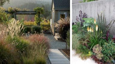 Oled pidevast muru kastmisest ja niitmisest väsinud? Nopi lahedaid ideid muruvabadest aedadest!
