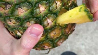 VIDEO | Ettevaatust! Internetis leviv nipp ananassi lõikamiseks on tüng