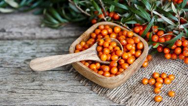Astelpaju — kohustuslik vitamiinipomm sinu sügismenüüs, mis aitab leevendada ja ennetada nii paljusid tervisehädasid