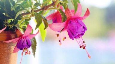 ФОТО | Какие цветы посадить на балконе? Выбираем подходящие растения для разных сторон света
