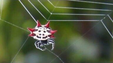 5 Küsimust ja vastust ämblike kohta