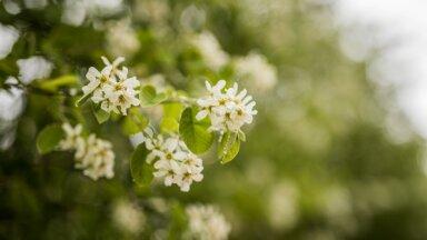 MURRAME MÜÜTE | Kevadkuud ei kordu aastast aastasse