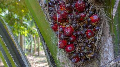 Palmiõli peidab end tootekoostises keerukate ühendinimede taga