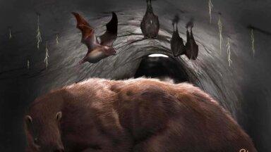 Kunstniku nägemus D. draculae liiki kuuluvatest nahkhiirtest (pilt: Miramari muuseum)