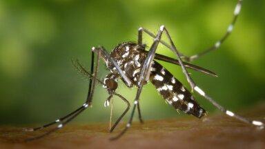 Правда ли, что комары предпочитают кусать людей определённой группы крови?