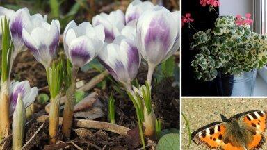 AIAHOOLIKU BLOGI   Hiline kevad ja erinevad arusaamad aiatöödest