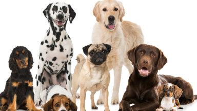 Teeme selgeks! Milline koeratõug sobib sinu isikuomadustega kõige paremini?