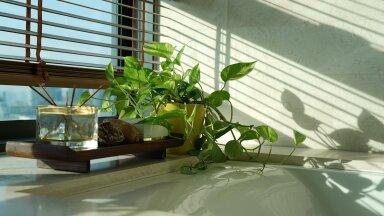 Эти точно выживут! 10 неубиваемых комнатных растений, которые украсят ваш дом