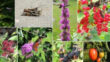 AIAHOOLIKU BLOGI   Kilde ja uitmõtteid augusti alguse aiast
