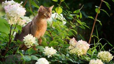 Kemikaalivaba puugitõrje lemmikloomale? Ekspertide sõnul on lahendused olemas