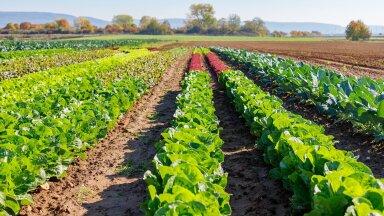 Bonduelle on võtnud sihiks jätkusuutliku põllumajanduse ja ressursisäästliku tuleviku
