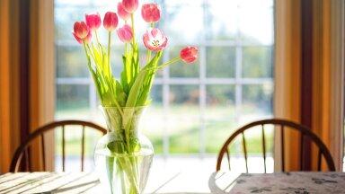 Секреты, как сохранить тюльпаны в вазе до 10 дней