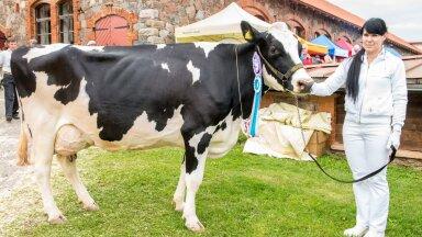 Eesti lehmade piimatoodang on 30 aastaga kasvanud 2,5 korda.