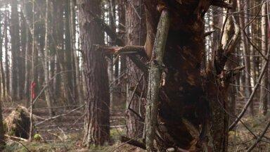 KAAMERAGA MAAL | Kogukond päästab raieohus metsa