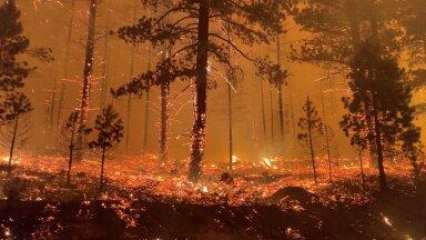 Kliima soojenedes muutuvad suured maastikupõlengud sagedasemaks.