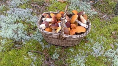 Selle aasta seenesaak