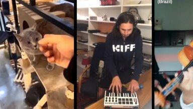 ВИДЕО   Музыканты со всего мира записали мегахит с мяукающим котиком