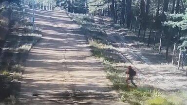 VIDEO | Valgevene-Leedu piiril tabas kaamera üle tara ronivad ja metsa silkavad aafriklased