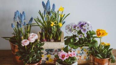 Как правильно выбрать цветочный горшок? Советы специалистов