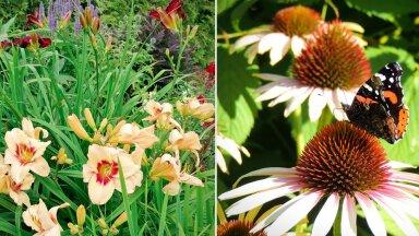 AIAHOOLIKU BLOGI   On päevaliiliate ja liblikate aeg...