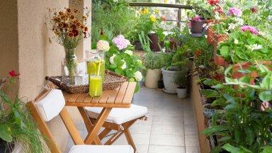 Eri tasapindadele paigutatud taimed loovad rõdul tõelise aiameeleolu.