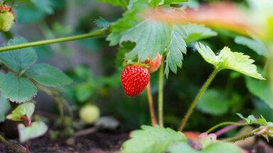 Ekspert: aia rajamisel tee selgeks oma vajadused