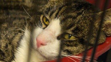 Noore kassi puhul on hambaprobleemid ennetatavad