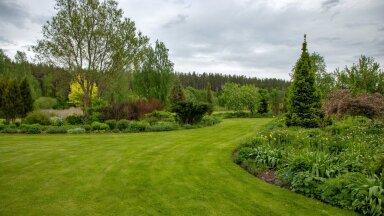 Klassikaline Inglise muru Räpina kandis Palusalu aias, kus selle peamine eesmärk on peenarde õieilu ja liigirohkuse väljatoomine. See aed murukonkursil ei osale.