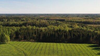 VIDEO   Vaata, mis saab metsast pärast seda kui seal on toimunud uuendusraie