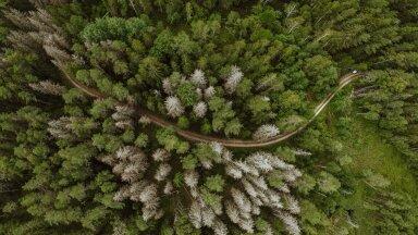 KUULA SAADET | Innovaatika #19: Elurikkus ehk biodiversity. Kui hästi on Eesti loodus kaitstud?