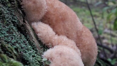 """Maaleht jagab teiega fotokonkursi """"Näe, ma pildistasin seent!"""" eriskummaliste seente fotosid"""