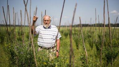 Ants Bender aretas Eestis uue lutsernisordi, mille ädalakasv on kiirem kui varasematel. Seetõttu annab sort mitu head niidet.