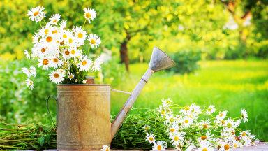 Taimede maagiline vägi: angervaks toob armastust, raudrohi kaitseb kurja eest ja saialill aitab tuua saladused päevavalgele