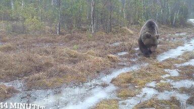 Vanamees ja Karu ehk kuidas karu Muusikuse jälgi pidi käis