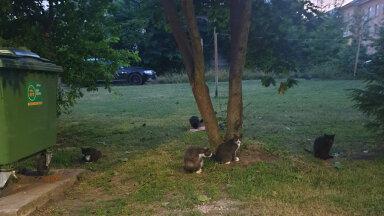 По городу бродит колония кошек, но никто ничего не делает