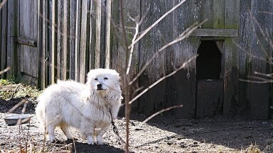 Koerad Peipsi kandis