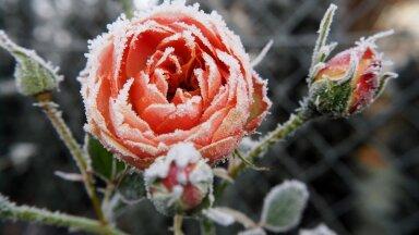 ФОТО | Семь чудесных растений, которые цветут зимой