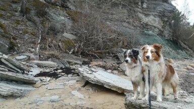 Sandy ja Zoey blogi: rännakud pimedas metsas ja puutumatus looduses õpetavad koerale reeglite kohta palju uut